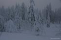 Arctic-Lapland-Rally-2016-5